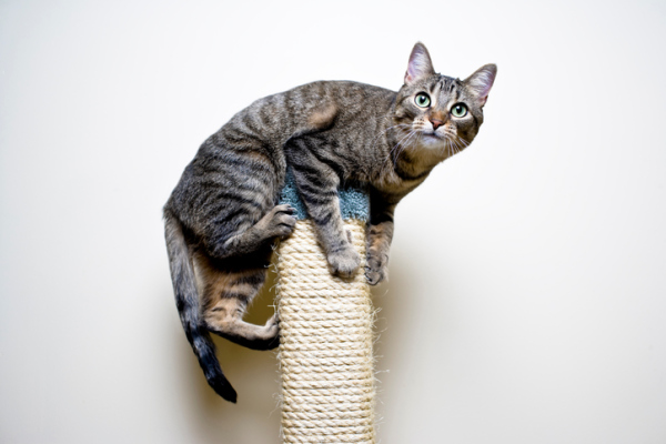 What to Consider when looking for the Best Cat Scratching Post Reviews and Advice